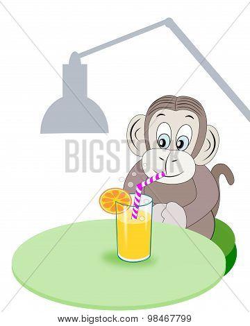 Monkey with Refreshment