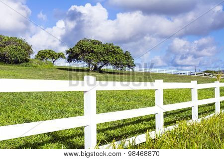A beautiful farm field surrounded by a white fence in Kauai, Hawaii shows a lone tree in the middle of the green pasture.
