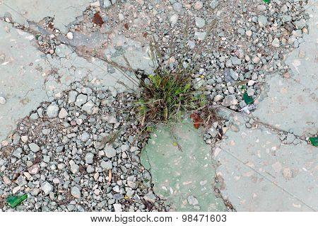 Difficulties overcom concept. Grass grow through cement pavement. Copyspace.