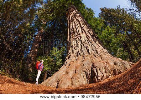 Girl standing near big tree in Redwood California