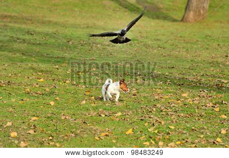 Bird chasing dog outside in park.