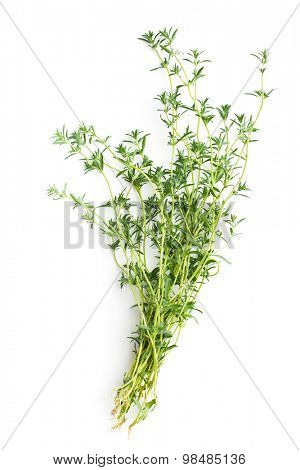 Fresh savory bunch on white background