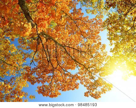 Autumnal trees and sunny sky