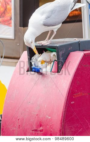Seagull On A Trash