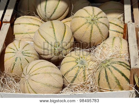 Big Melons In The Fruit And Vegetable Market