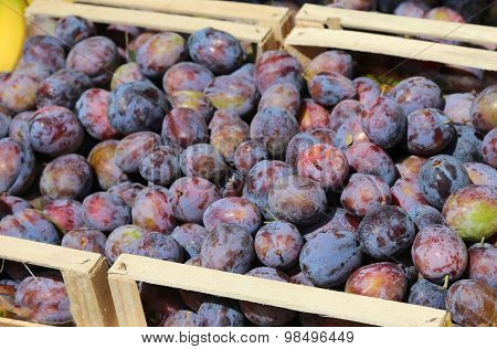 Boxes Of Purple Plums For Sale At Vegetable Market