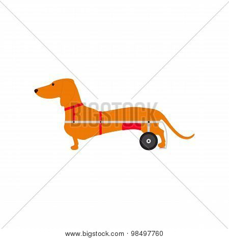 Dachshund On Wheels