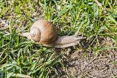 Постер, плакат: Snail In The Wild