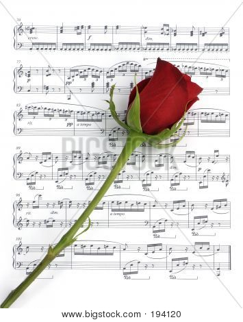 Single Music Rose