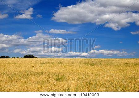 ripe Wheat und blauer Himmel, Ernte-Zeit in Spanien