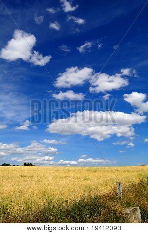 reif Weizen und blauer Himmel, Ernte-Zeit in Spanien