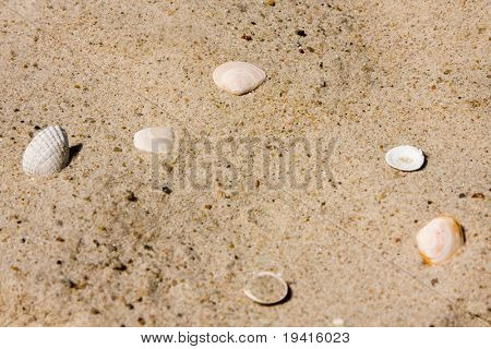 Few shells on sandy beach in sunny day
