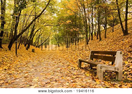 Bench on footpath in park full of yellow leaves