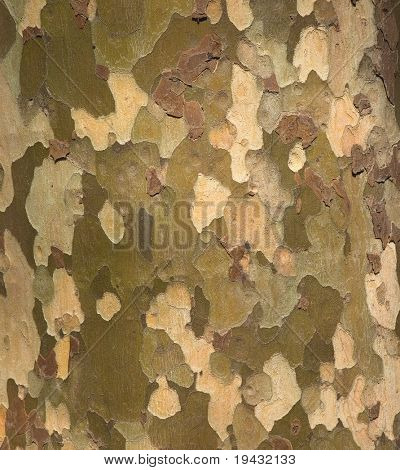 Camouflage pattern like Platunus ( sycamores ) tree bark.
