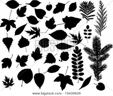 many high detailed leaf vector