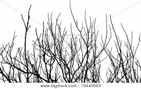 High detailed branch vector