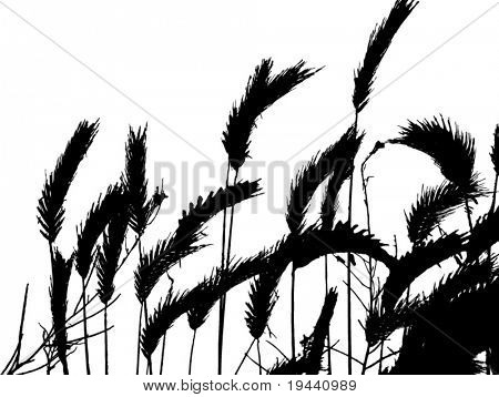 wheat plants sihouette vector