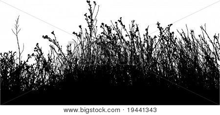 vector silhouette of many field plants and herbs
