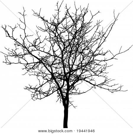 Tree silhouette - detailed vector