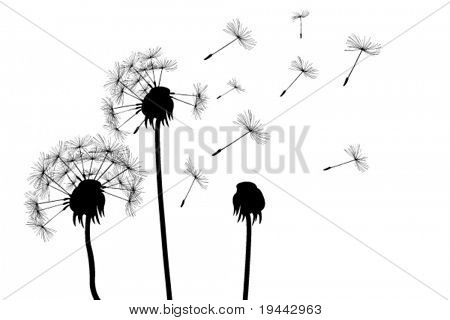 dandelions (for more see my port)