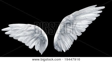 two wings isolated
