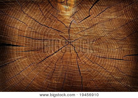 Dried tree cut texture