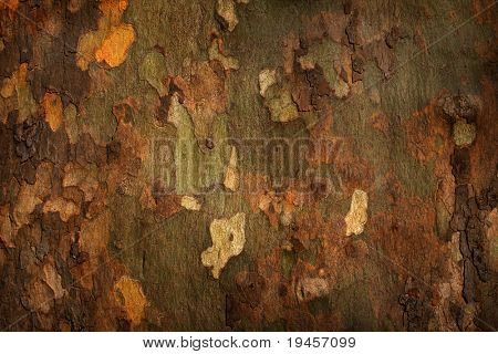 Platan tree bark background