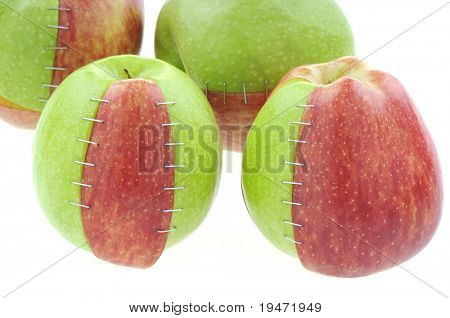 White background studio image of genetically modified objects concept made by different types and colors of apples stapled together.