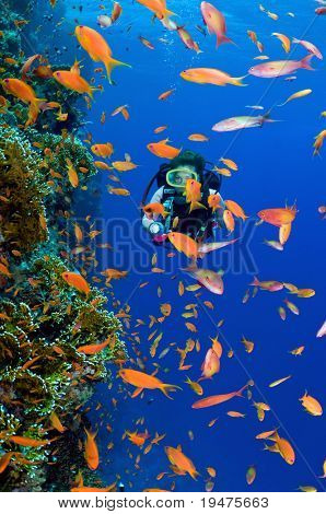 Woman scuba diver exploring soft corals - a series of UNDERWATER IMAGES.