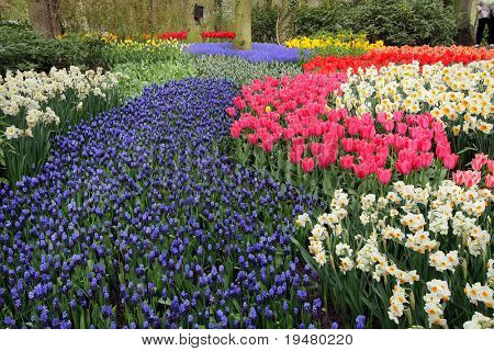 Spring flower bed in Keukenhof gardens, the Netherlands