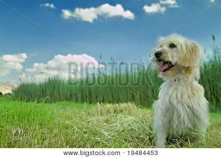 Domestic dog enjoying nature