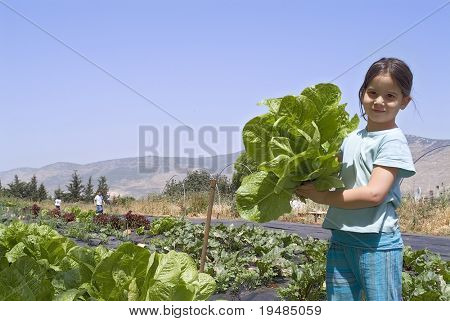 girl holding lettuce in vegetable garden