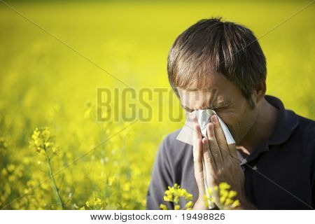 Young man in yellow canola field blowing his nose and suffering from hay fever.