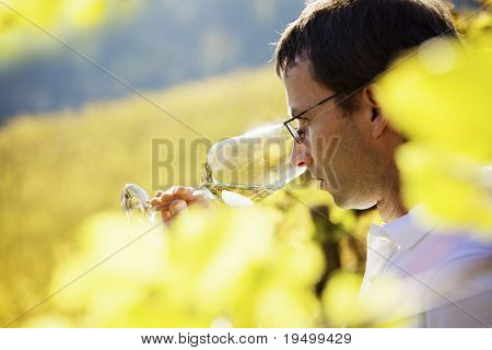 Serious male winemaker holding a glass to taste wine in vineyard with blurred vine leaves in foreground.