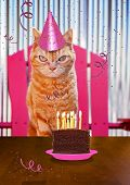 a orange cat with a piece of cake on a plate with candles and streamers for birthday card or other t poster