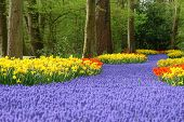 foto of horticulture  - Spring flower bed - JPG