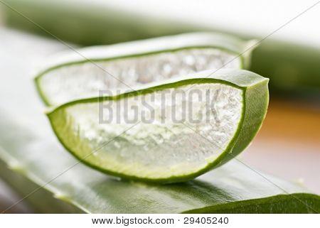 Aloe Leaf with Slice