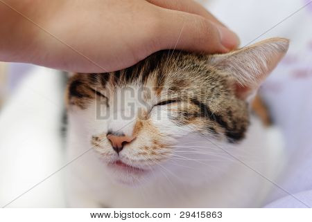 Person stroking head of cat