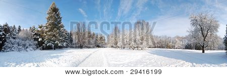 The Panorama Of Trees Covered With Snow In Oleksandriya Park , Bila Tserkva, Ukraine