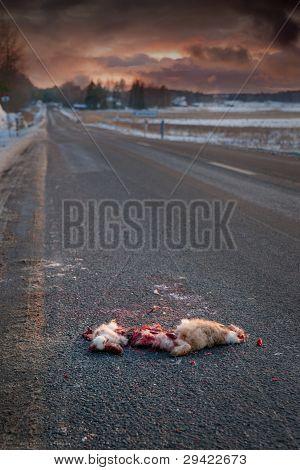 Road Killed Animal