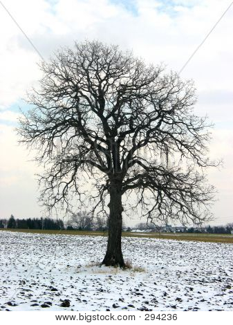Tree In A Winter Field