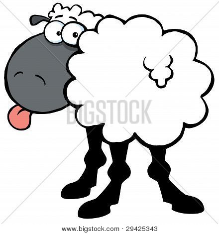 Black Barnyard Sheep