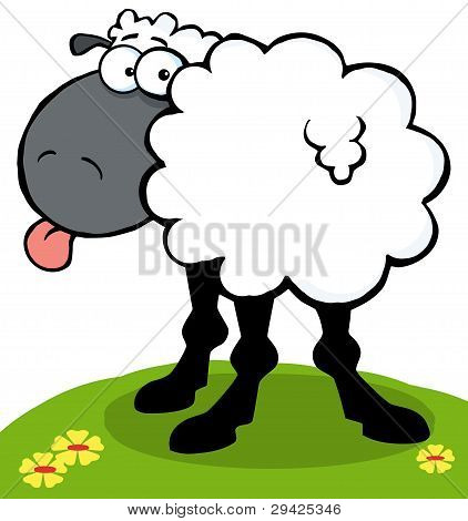 Black Sheep Sticking Out His Tongue On A Hill