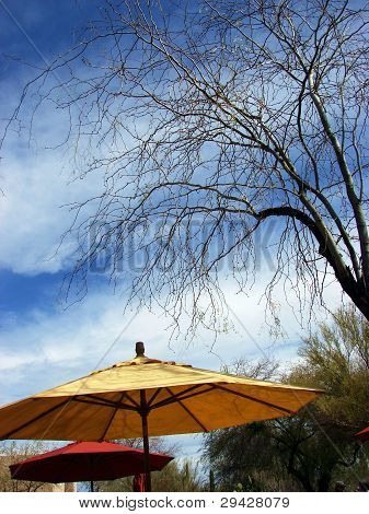 Umbrellas against sky and tree