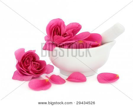 Rose flower petals in a porcelain mortar with pestle and scattered isolated over white background. Rosa rugosa.