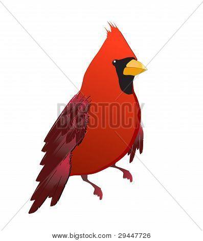 red cardinal bird