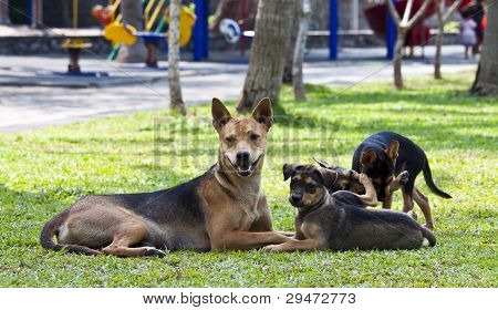 Mixed breed dogs.