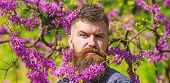 Hipster Enjoys Spring Near Violet Blossom. Man With Beard And Mustache On Strict Face Near Flowers O poster