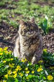 Fluffy Cat Playing In Garden. Portrait Of Fluffy Cat In Garden. Cat And Spring poster