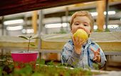 Organic Apple. Small Kid Eating Fresh Organic Apple. Organic Apple Is A Healthy Natural Product. Org poster